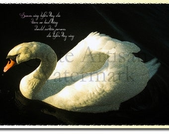 Swans Original Photographic Art Print - 12x8 Inch Photo Poster Gift - With Quote