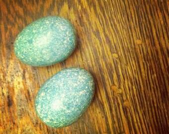Pair of Wood Robins Eggs