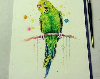 green budgie - mounted original painting
