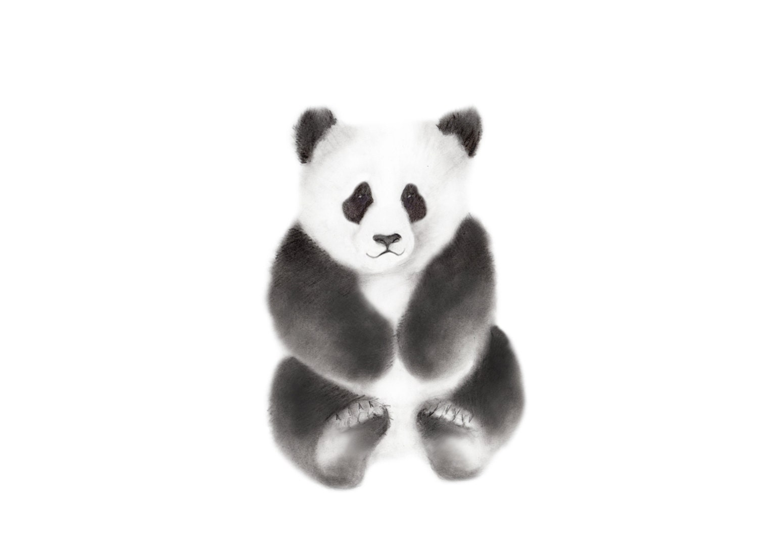 Cute Panda Drawings In Pencil