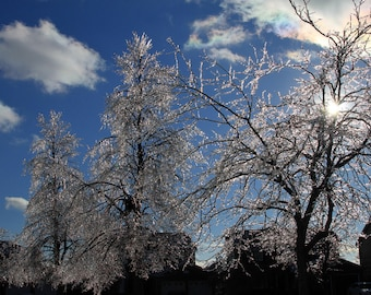 Ice On Trees After The Storm
