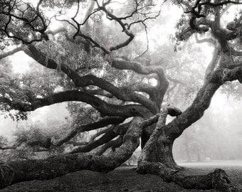 Angel Oak, Charleston, South Carolina