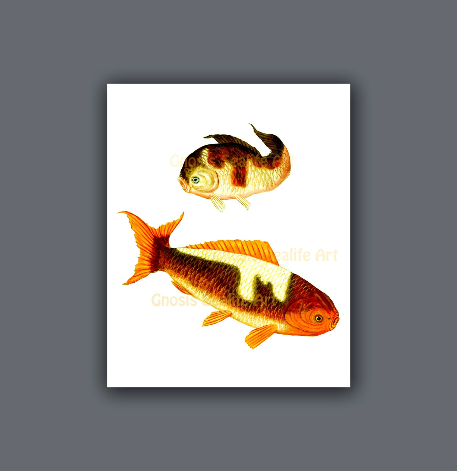 Asian art decor print japanese carp koi fish wall art print for Koi carp wall art