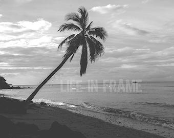 Maui Palm Tree, Beach, Hawaii, Black and White Photography