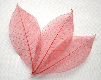 Red Skeleton Leaves