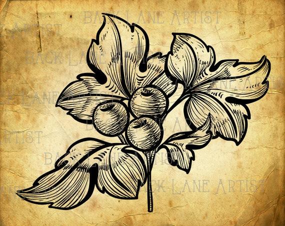 Line Art Etsy : Items similar to christmas mistletoe holly wintergreen