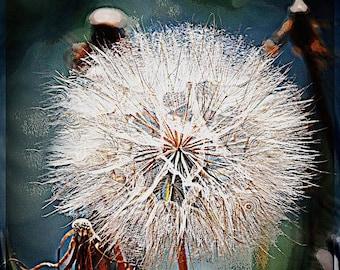 Blue Dandelion, Graphic Dandelion, Handmade Greeting Card, Blank  Inside, Fine Art Photography