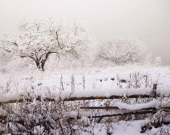 Digital download. Winter landscape. Image size 5355 x 3575