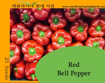 Red Bell Pepper seeds - 25