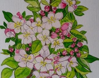 Framed painting in gouache - Apple Blossom