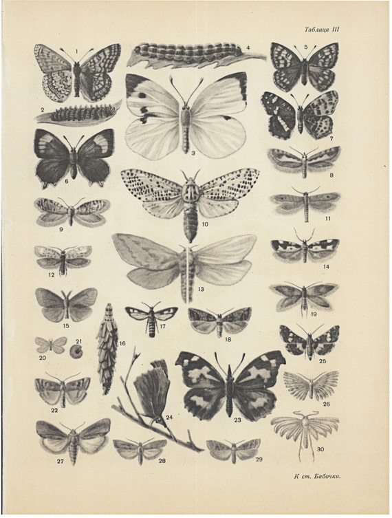 Vintage Insects Print Butterflies Art Poster Black and White
