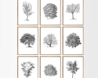 Antique Trees Art Print SET of 9. UNFRAMED. tree silhouette,  modern tree art,  tree art set,   woodland art, tree of life, black and white