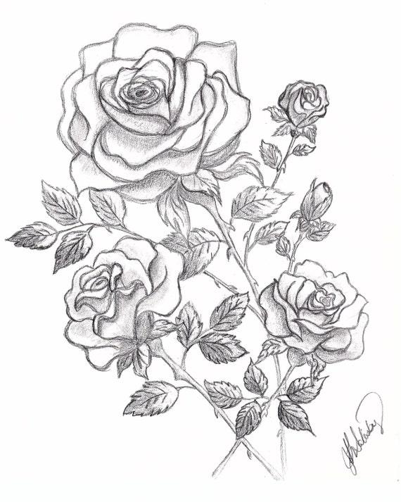 Dessin de 3 roses et boutons de graphite - Dessin de rose ...