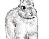 Cute Bunny in Graphite