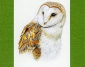 ACEO Barn Owl Artist Trading Card