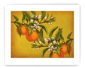 "Oranges on Branch: Decorative Vegetable Art Reproduction, 8"" x 10"""