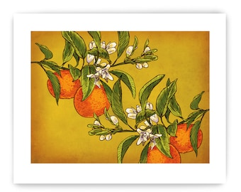"Oranges on Branch: Decorative Vegetable Art Reproduction, 8"" x 10"""