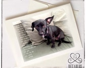 Proceeds to Animal Rescue, Dog Photo Greeting Card, Original Poem, Foster Dog, Chiweenie, Save A Life, Any Occasion, Blank