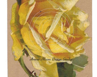 Shabby Vintage Chic Victorian Postcard Klein Collection Beautiful Single Yellow Rose Digital Download Images - Klein-5