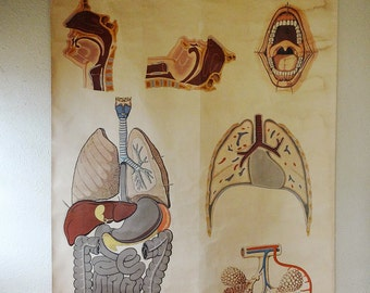vintage anatomical poster of illustrated lungs and intestines, from Holland, 1920s