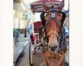 "New Orleans Art Print ""Let's Ride"" French Quarter Photography Wall Art. Multiple Sizes, Mule, Carriage Ride, Affordable Home Decor."
