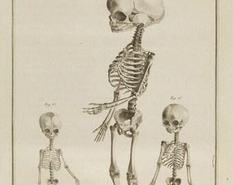antique french anatomical print three fetal skeletons illustration DIGITAL DOWNLOAD