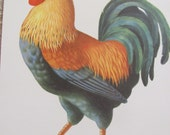 Large Illustrated School Flash Card Poster - Alphabet Letter - Rooster - Many to Choose from!
