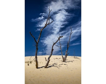Barren Tree Trunks with Cirrus Clouds on the Silver Lake Dunes near Lake Michigan No.37 - A Dune Seascape Photograph