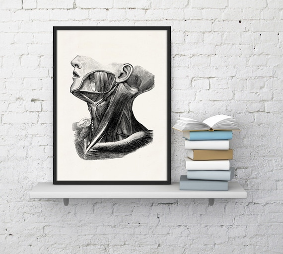 Wall art human anatomy print, Neck muscles study Print Doctors gift neck anatomical print Science student gift SKA044WA4