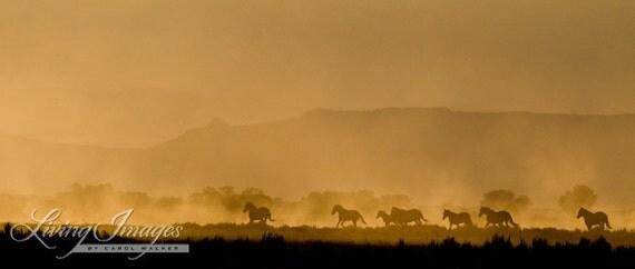 Wild Sunrise Run - Fine Art Wild Horse Photograph - Wild Horse - McCullough Peaks - Fine Art Print
