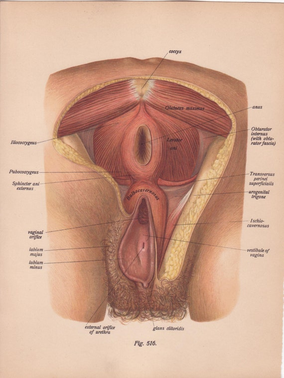 Female vagina and anus pics