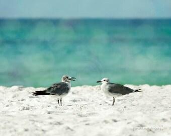 Seagulls Bird Photography, Beach Cottage Photo, Nautical Seagull Bird, White Sand Teal Water Bokeh Aquamarine Seafoam Summer Travel Print