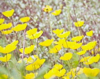 Yellow cosmos photograph, nature, botanical, floral, summer, meadow fields, wildflower, nursery, home decor, soft pastel, Christmas