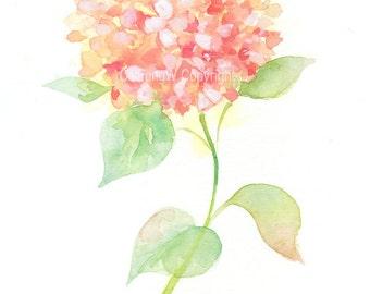 Fine art watercolor painting, flower art, pink Hydrangea WATERCOLOR PRINT, giclee print, flower interest