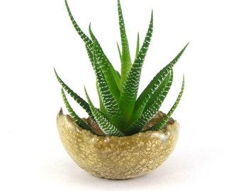 Yellow Cracked Mud Kusamono Pot, Small Succulent Planter, Mustard Yellow Bonsai Accent Planter or Bonsai Pot 01-15-22