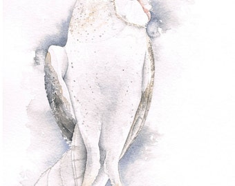 Barn Owl Original Watercolour painting, Free Shipping