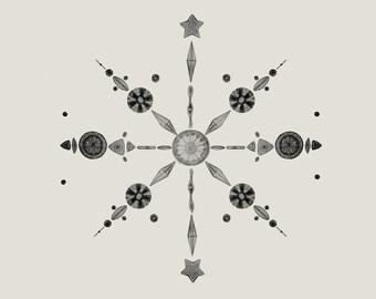 Diatoms - Giclée
