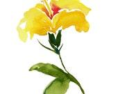 Yellow Hibiscus - Waterco...