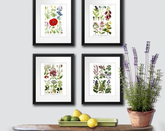 Gift for mom, Spring Wall Decor, Antique Botanical prints set of 4 Wild Flowers English Cottage Decorating Wall Art Prints