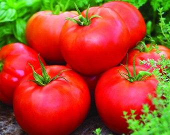 "Big Boy Tomato 4 Plants / 2"" Pots - Heavy yields"