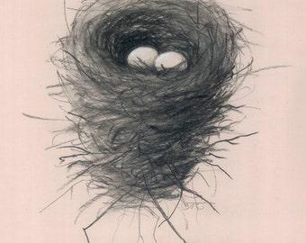 72 Nest3