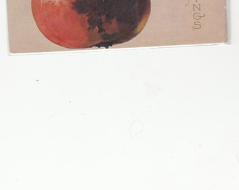 1910s A/S C. Klein With Red Apple Antique Birthday Postcard, Adage Wriitten About Apple
