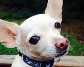 Small Dog Blessed Paw Print Dog Collar