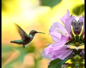 Bird Photography,Bird Picture,Hummingbird  Photo, Photo of Hummingbird,Photograph of Hummingbird, Picture of Hummingbird,Hummingbird Picture