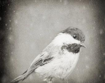 Bird Digital Photography Download, Little Bird Photo, Snow, Chickadee, Fine Art Photography, Print Download, 8x8, 5x5, 10x10