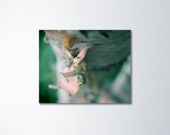 Birch Tree Art, Birch Photography, Canvas Art, Nature Wall Art, Tree Canvas Art, Macro Photography, Abstract Photography on Canvas Decor