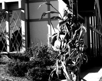 Black and White Photography, Light Post, Michigan, Autumn