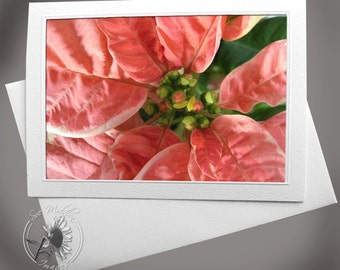Photo Greeting Card: Pink Poinsettia