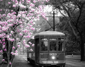 St. Charles Streetcar (Canavs wrap)