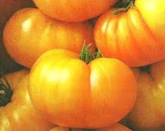 Dagma's Perfection Tomato seeds